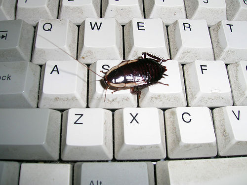 cockroach on keyboard