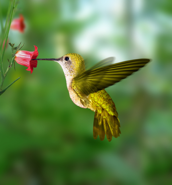 hummingbird at peace