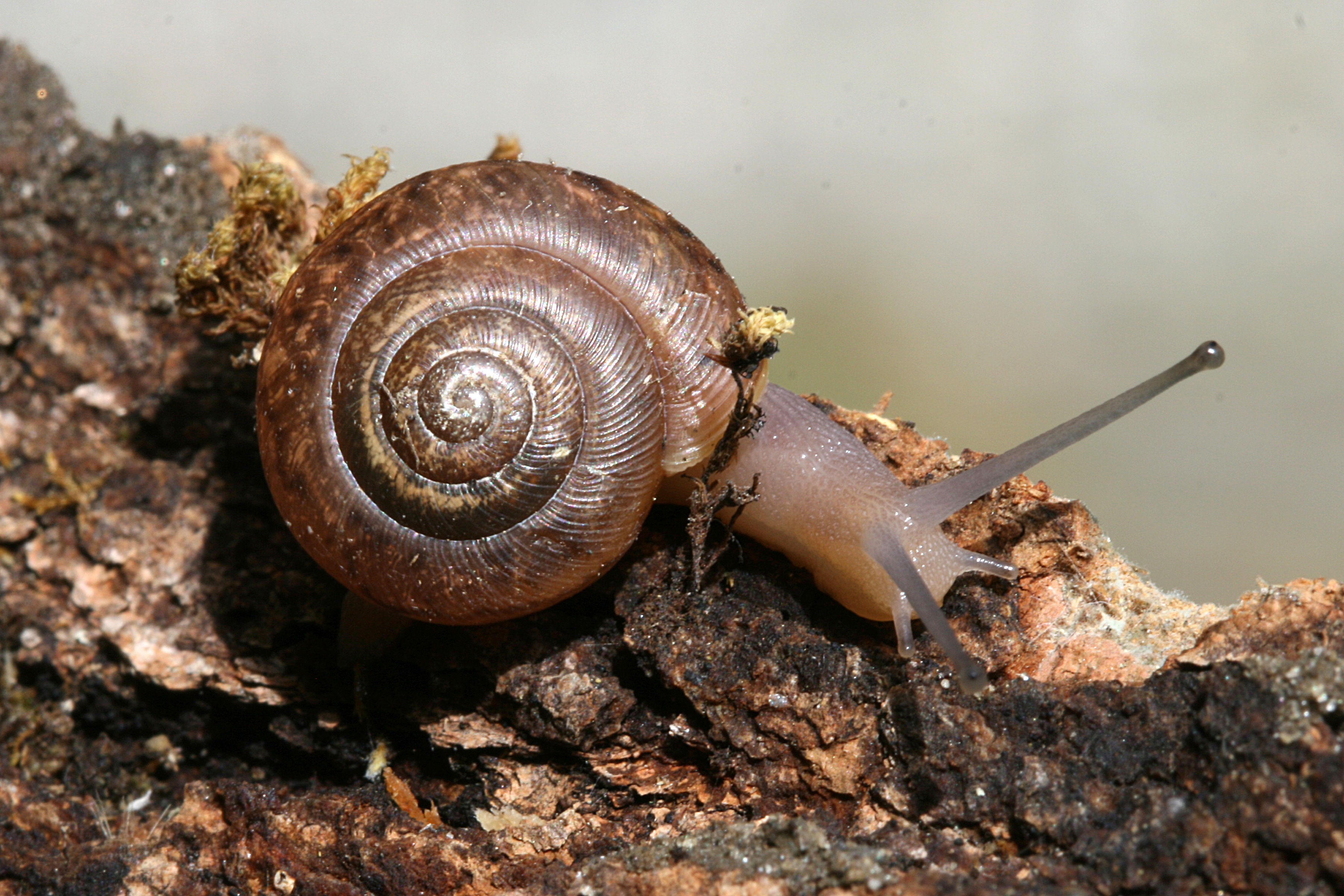 I wish I were a snail