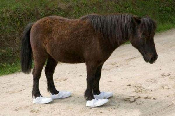 pony in human shoes