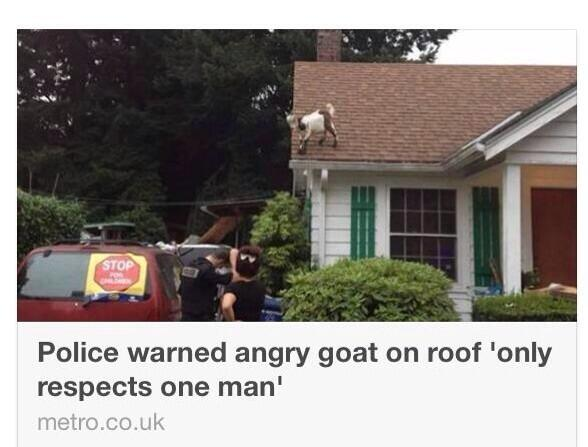 Police warned angry goat on roof 'only respects one man'